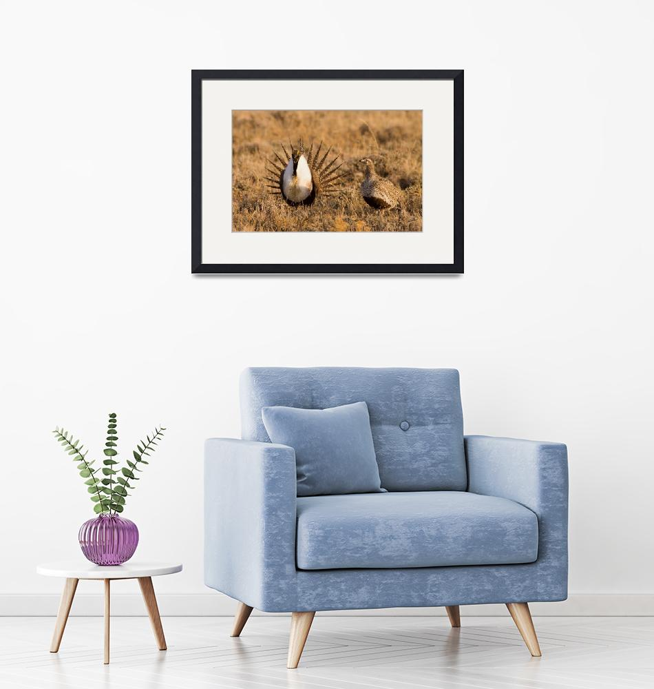 """""""Greater Sage-Grouse I""""  (2009) by prairie_ice"""