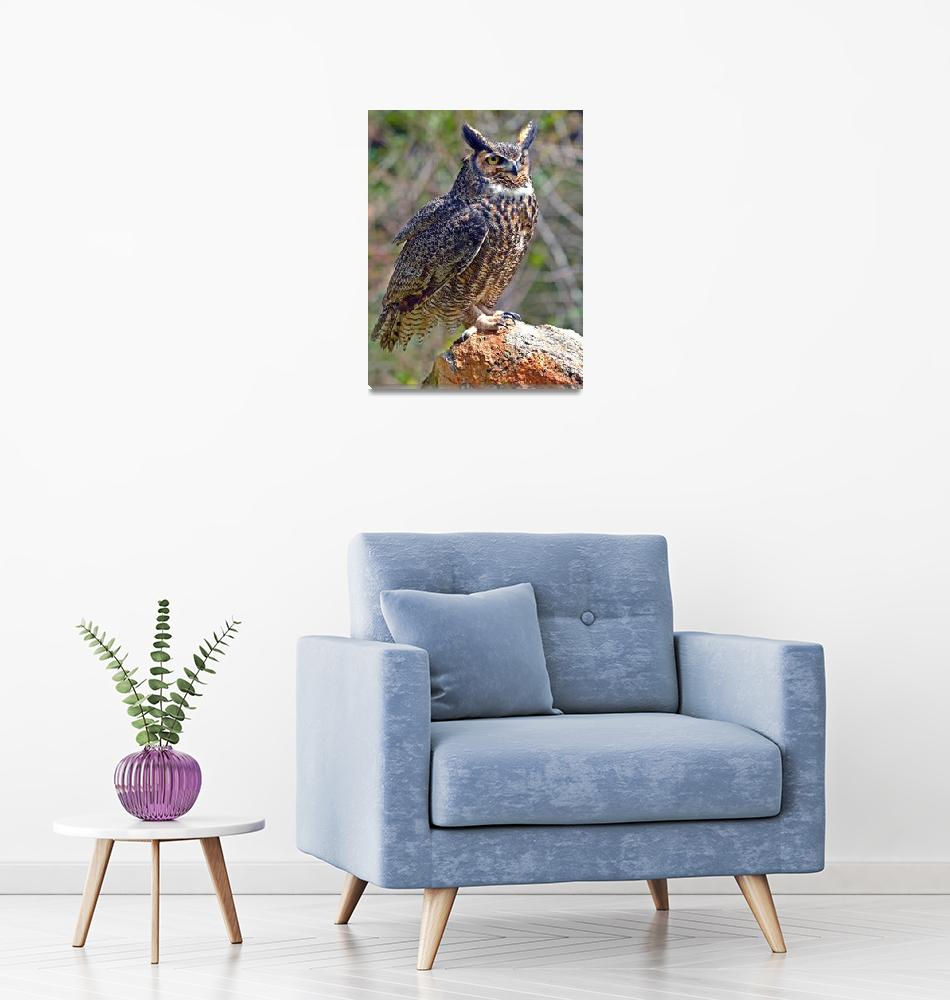"""""""Great Horned Owl""""  (2016) by ajc401"""