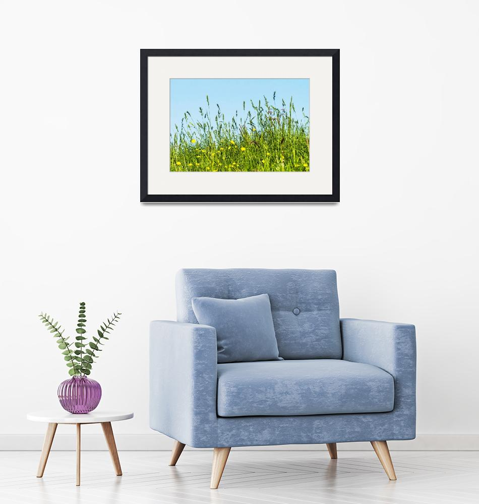 """""""Meadow, grasses on a dyke on the Elbe in Germany""""  (2018) by Fraenks"""