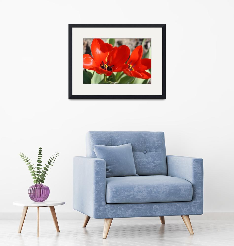 """""""Red Tulips""""  (2009) by AlyceTaylor"""