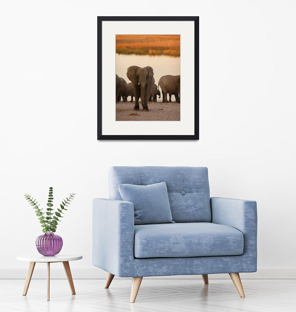 """Lost African elephant""  (2007) by clapar"