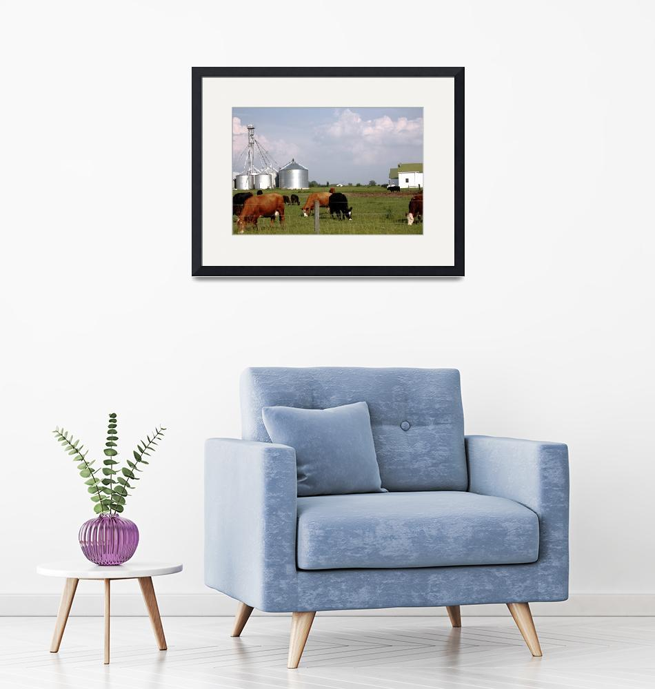 """Milk Cows Grazing Down On The Farm""  (2010) by fotobits"