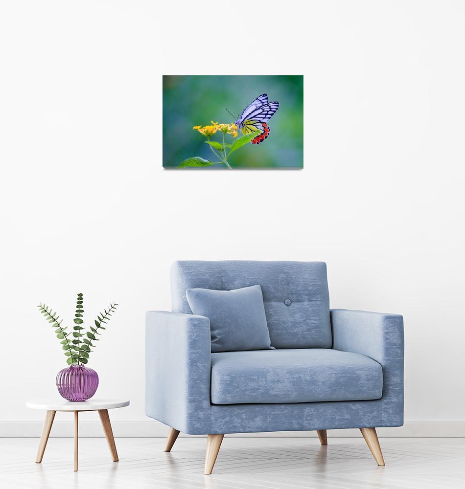 """""""Indian Common Jezebel Butterfly""""  (2017) by RobbieRoss"""