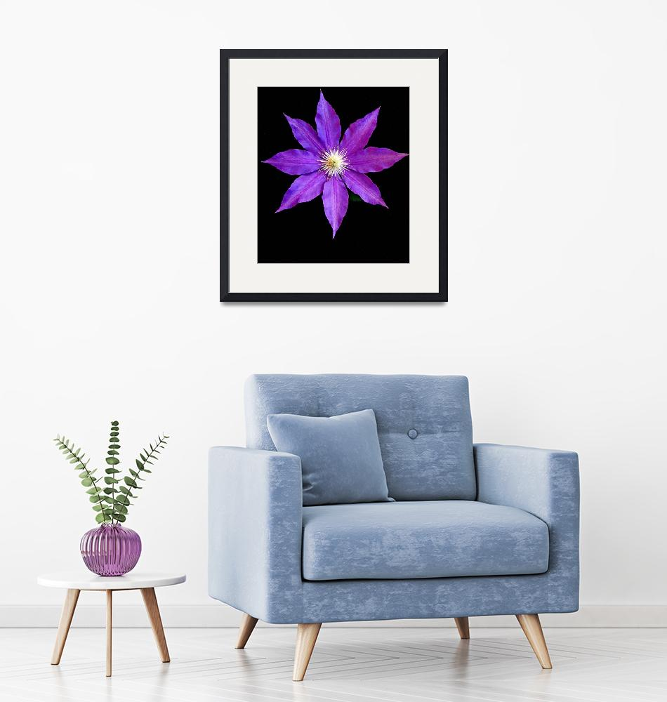 """""""Clematis""""  (2010) by LindaYvonne"""