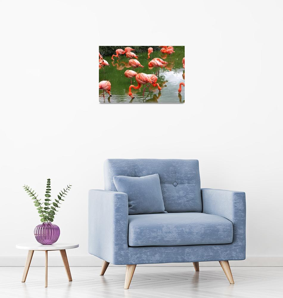 """""""Flamingos""""  (2008) by jdmphotography1"""