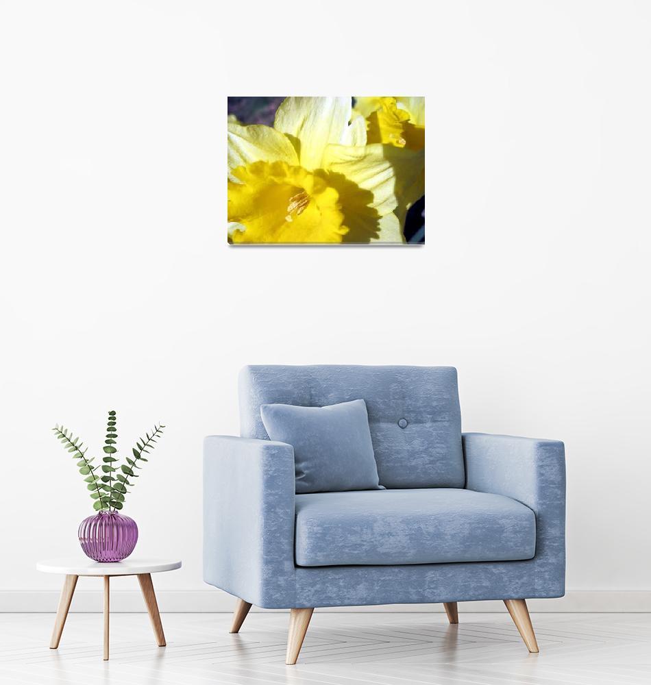 """Daffodils""  (2012) by johnscanvassprints"