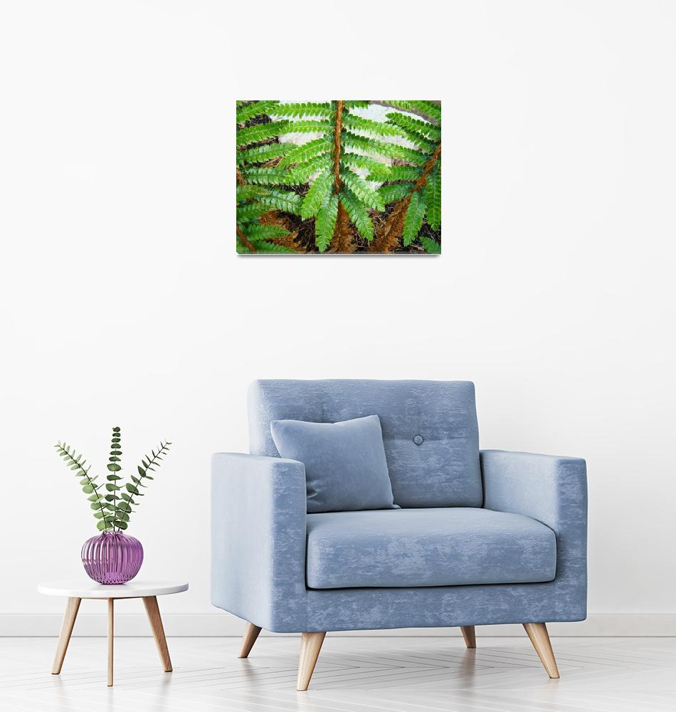 """Forest Ferns Branches Leaves Art Prints Fern""  (2014) by BasleeTroutman"