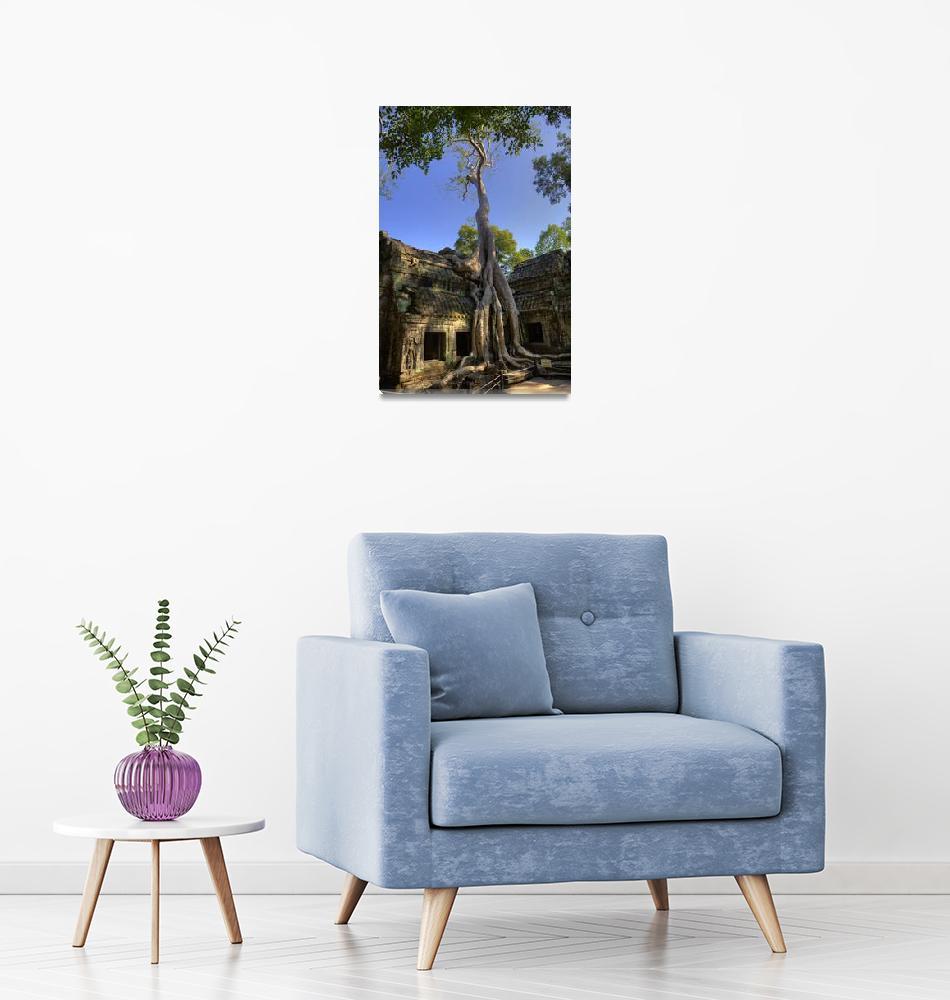 """Famous Tree at Ta Prohm""  by RaymondLee"