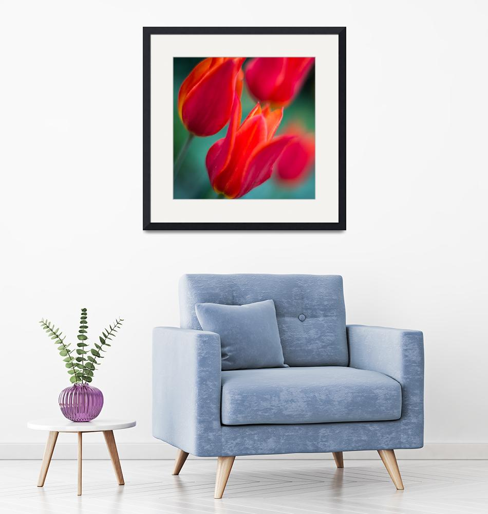 """Colorful tulips""  (2016) by Stopshort"
