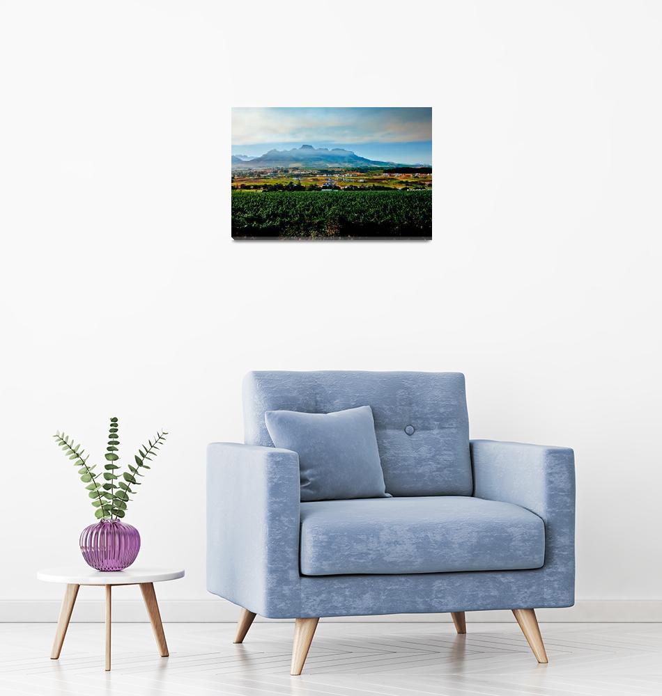"""""""Vineyard in Stellenbosch, South Africa""""  (2006) by dbhalbur"""