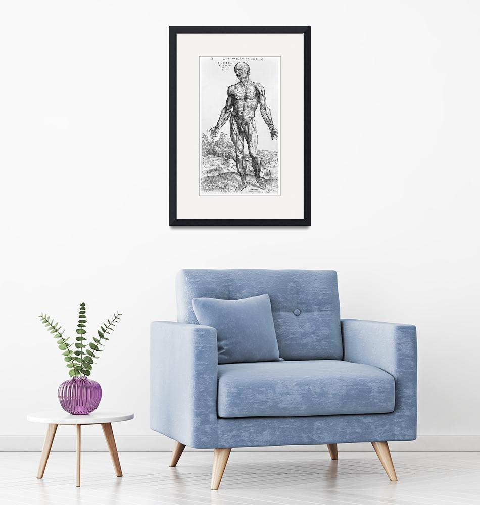 """""""Anatomical Study, illustration""""  by fineartmasters"""