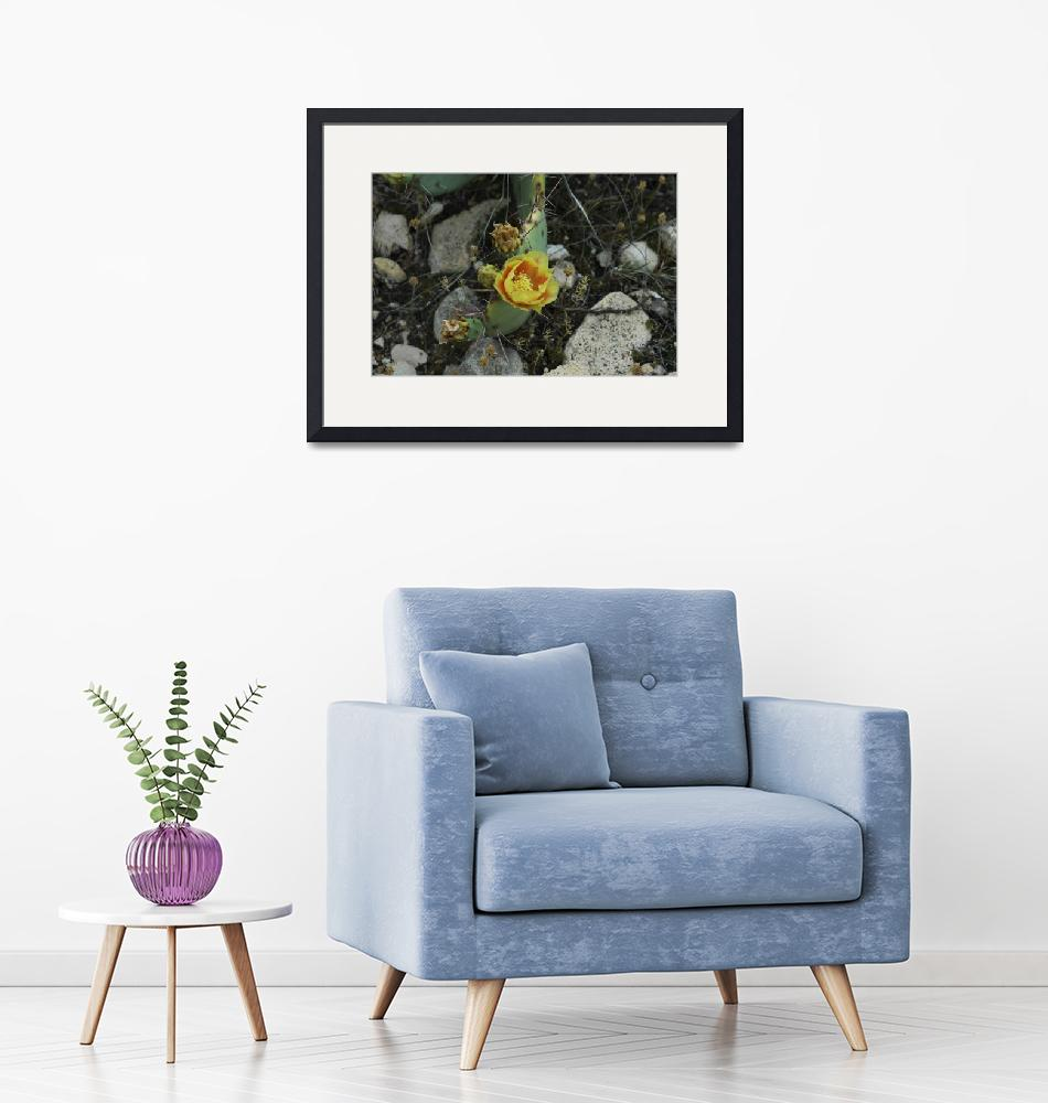 """""""Yellow Cactus Flower""""  (2005) by cthoward"""