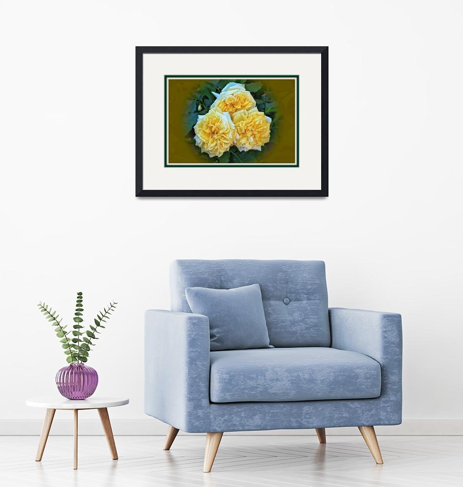 """""""Big Fluffy Yellow Roses.""""  by ROBERTSCOTTPHOTOGRAPHYY"""