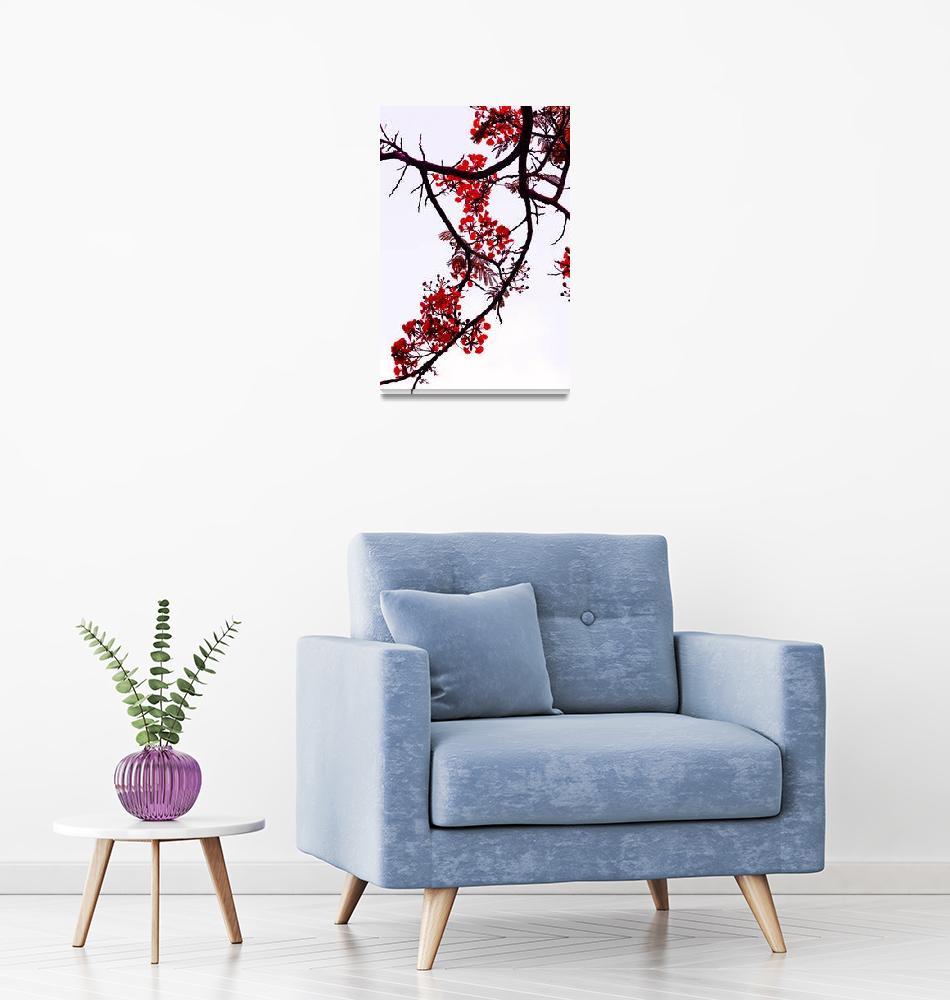 """Spring Blossom in Maldives. Flamboyant Tree""  (2014) by JennyRainbow"
