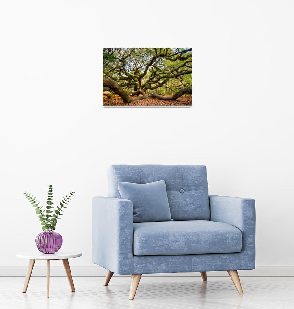 """Charleston Angel Oak Tree South Carolina Landscape""  (2017) by DAPhoto"