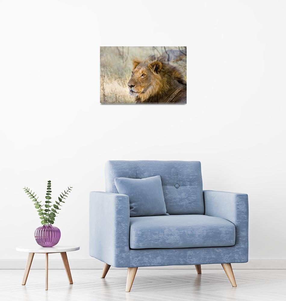 """""""African Lion""""  (2016) by mjphoto-graphics"""