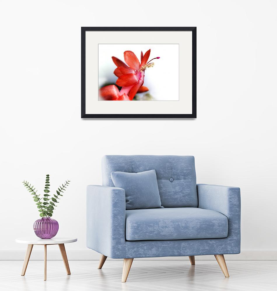 """""""Coral Christmas Cactus with White Background 2016""""  (2016) by KsWorldArt"""