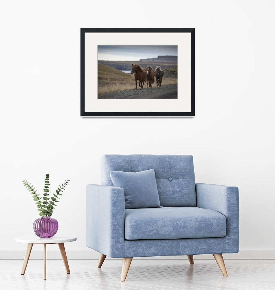 """""""Three Horses and Coastal Bluffs, Western Iceland""""  (2016) by SederquistPhotography"""