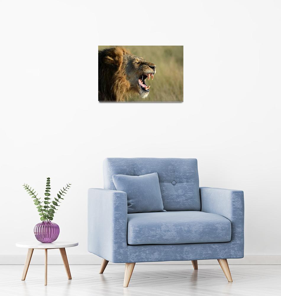 """""""Lion growling""""  (2018) by thewildside"""
