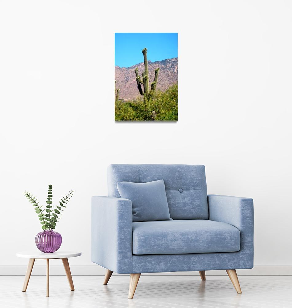 """Saguaro with Catalina Mountains""  (2009) by MyHartArt"