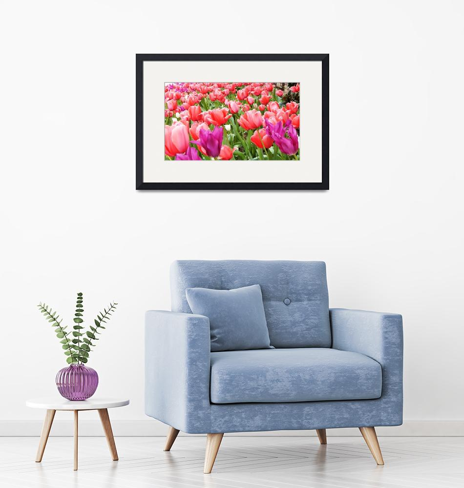 """""""Sea of Spring Tulips""""  (2016) by globetrotter1"""