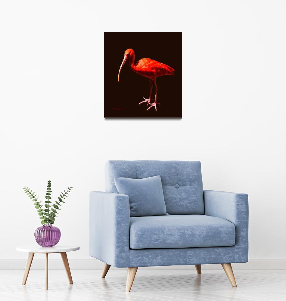 """Scarlet Ibis on Black""  (2011) by AnimalsbyDiDi"