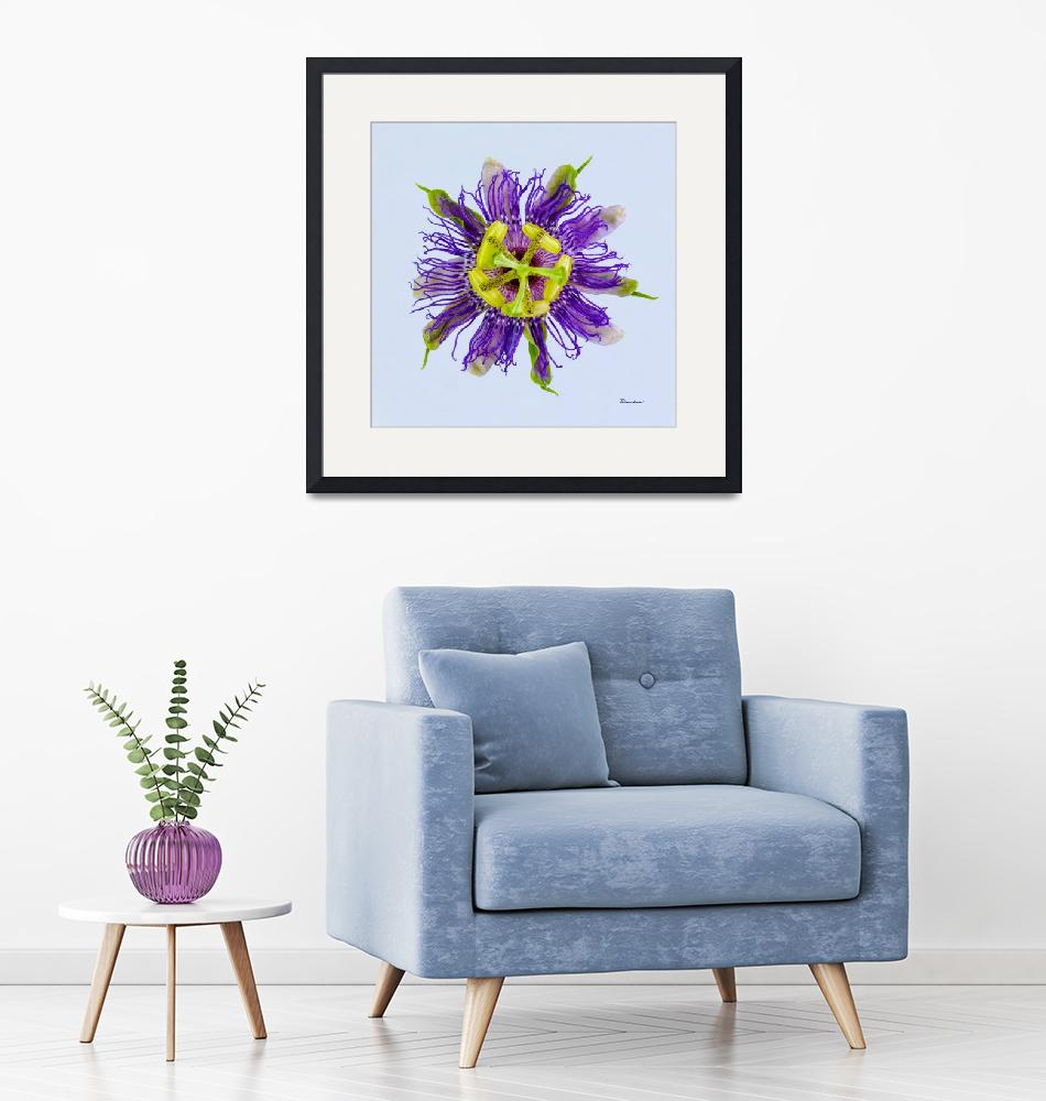 """Yellow Green and Violet Passion Flower 50674b""  (2018) by Ricardos"