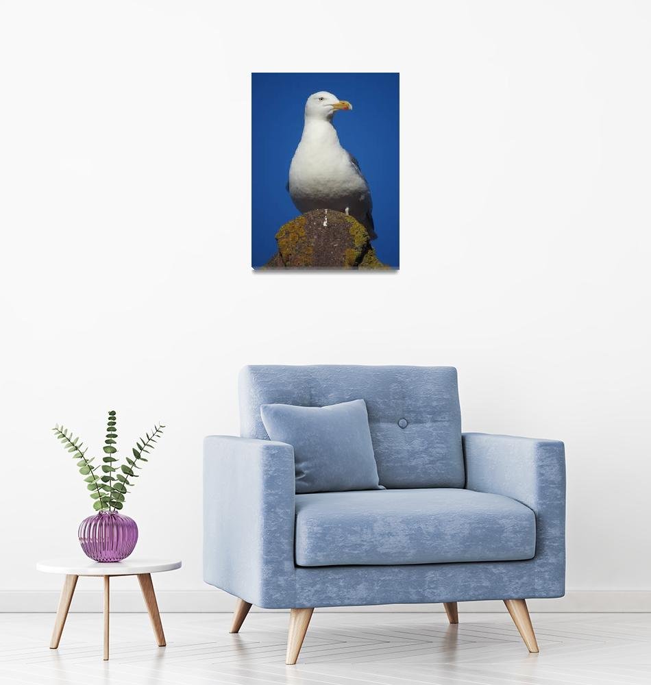 """""""Seagull with Blue Sky""""  by MrkStam"""