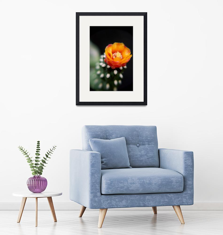 """""""Cactus in Bloom""""  by fayesta"""