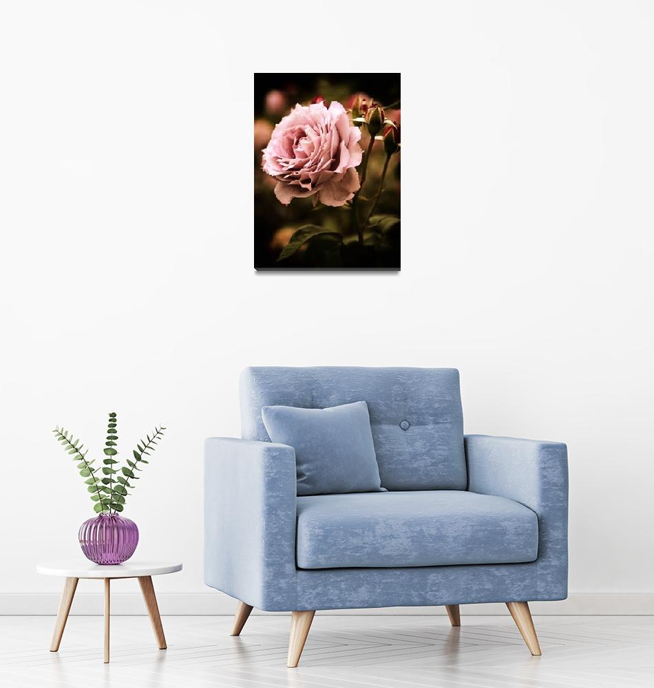 """""""Rose Blooms at Dusk""""  (2018) by JessicaJenney"""