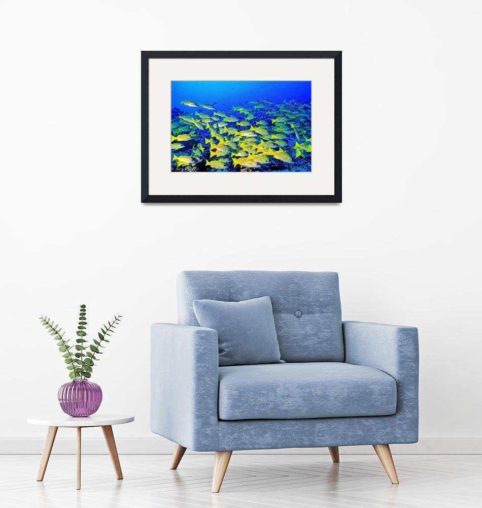 """""""Yellow on Blue""""  (2000) by JoaoPonces"""