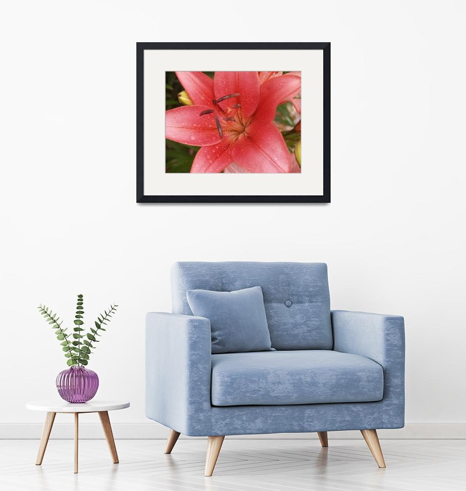 """""""Raindrops upon a Pink Lily bloom""""  (2012) by MikeMBurkeDesigns"""