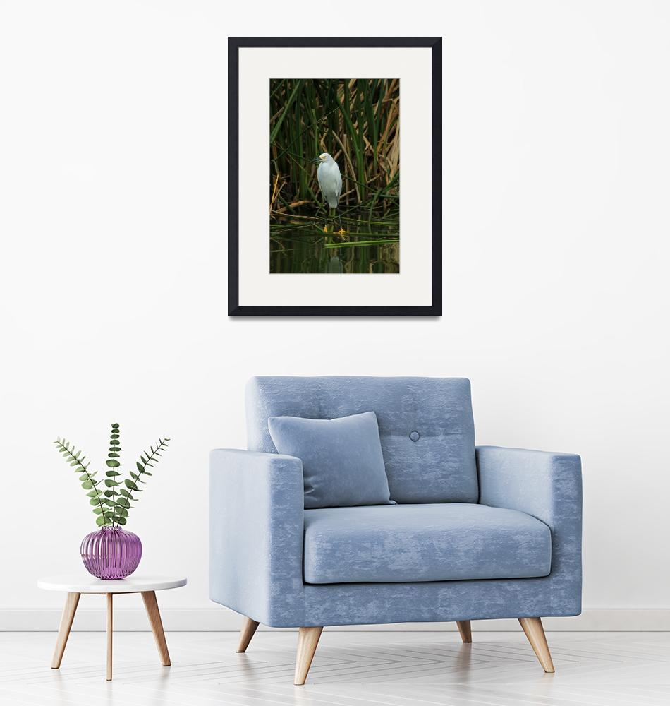 """Snowy Egret in Shallow Water""  (2016) by rhamm"