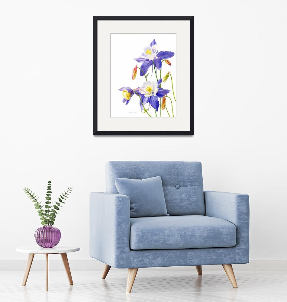 """""""Blue Columbine Flowers, white background""""  (2010) by Pacific-NW-Watercolors"""