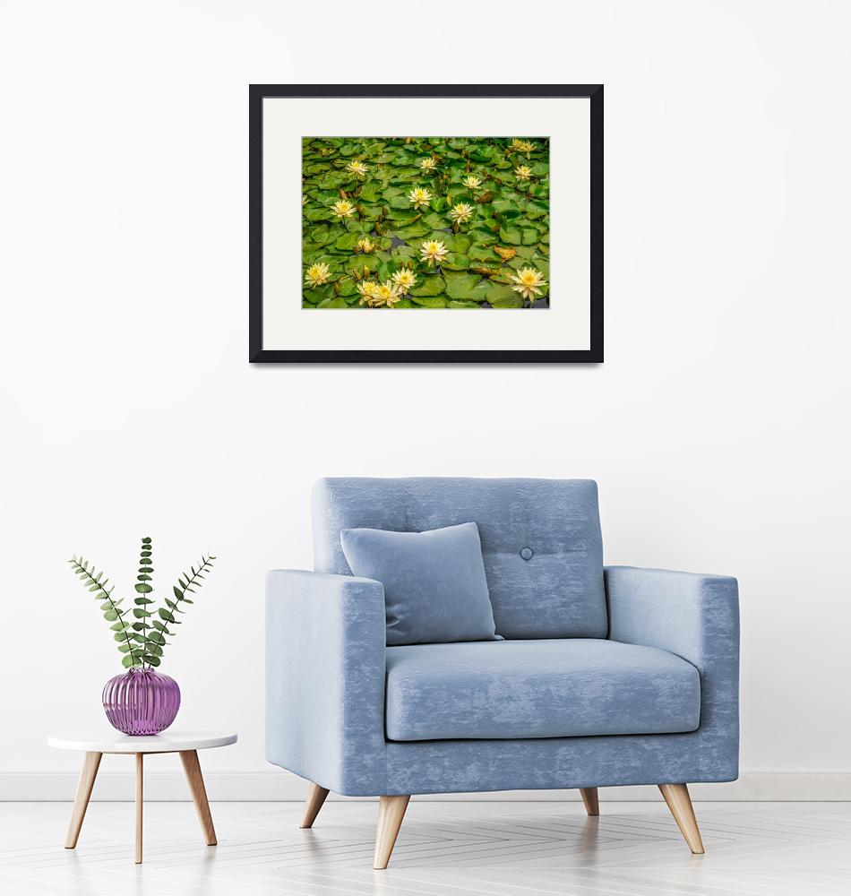 """""""Water Lilies""""  (2017) by ChadComptonPhotography"""
