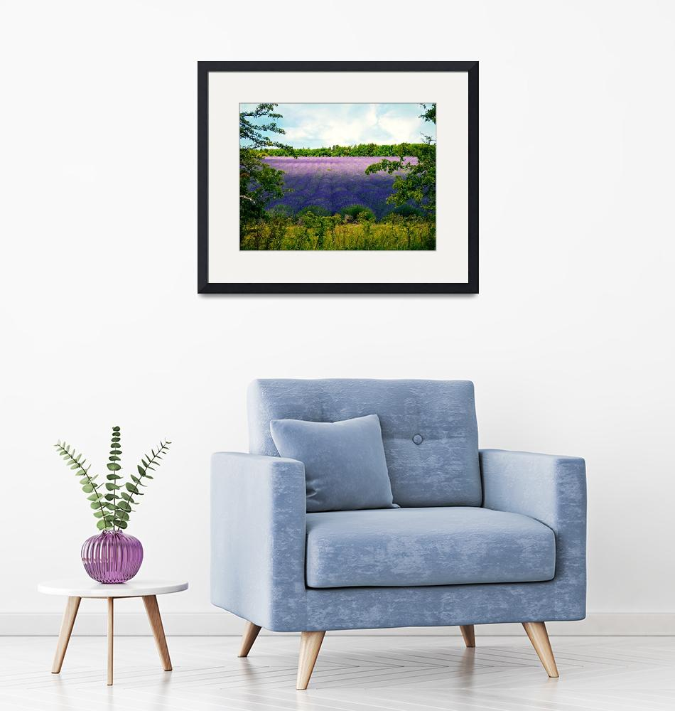 """""""Summertime Lavender""""  (2015) by ScenicViewPhotography"""
