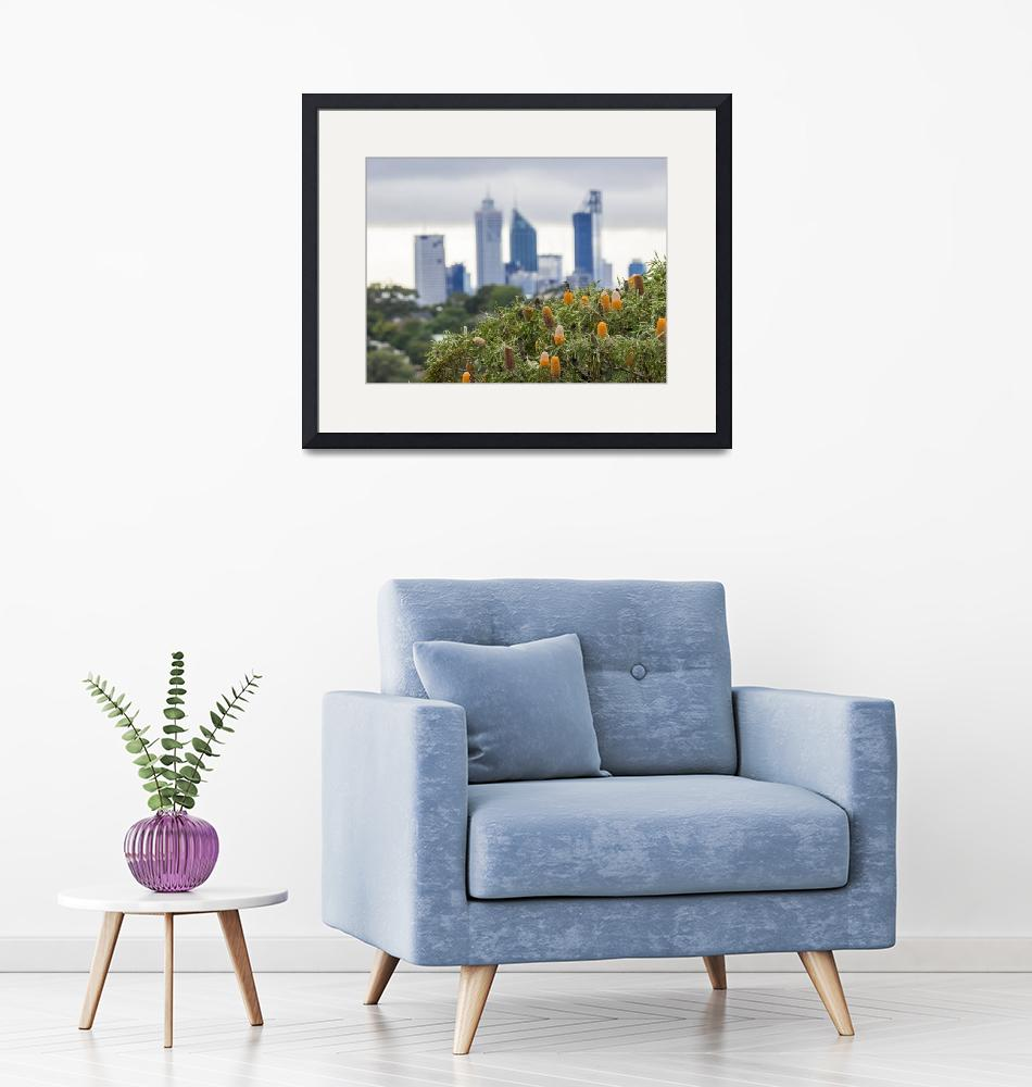 """""""Honeyeater Banksia and Perth City Skyscrapers.""""  (2016) by macroscape"""