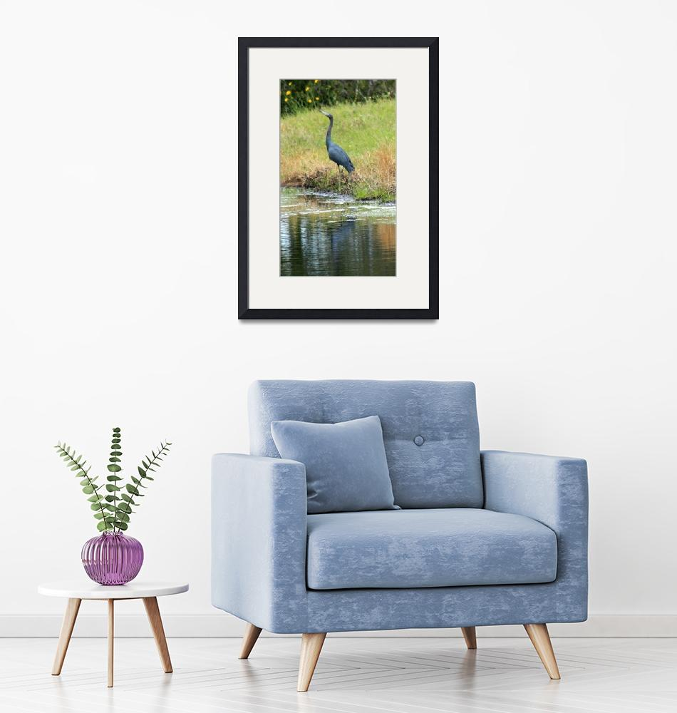 """Little Blue Heron""  (2008) by rayjacque"