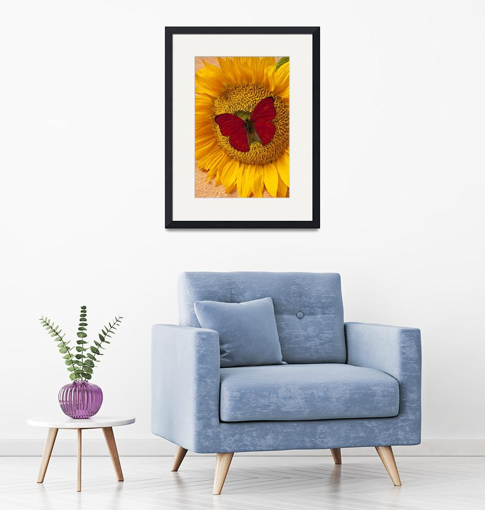 """""""Red Butterfly On Sunflower""""  (2012) by photogarry"""