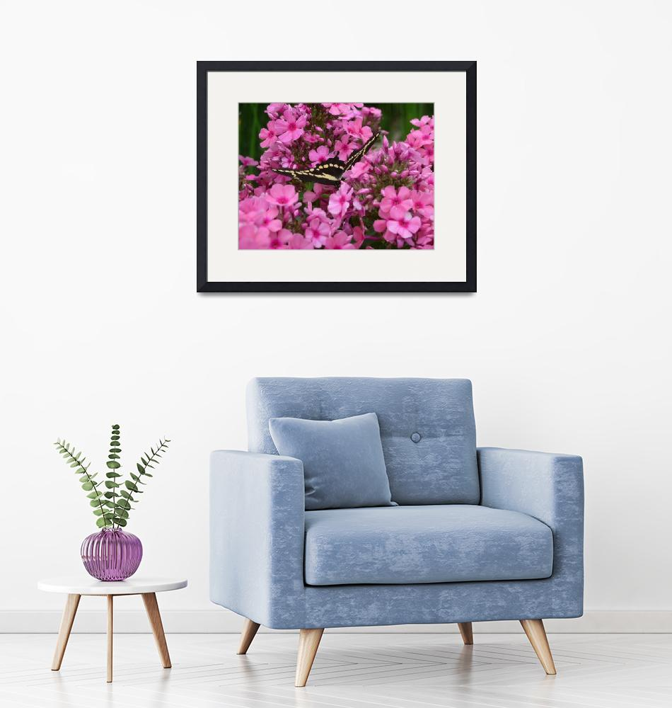 """""""Pink Phlox with Butterfly""""  (2009) by Aquila6"""