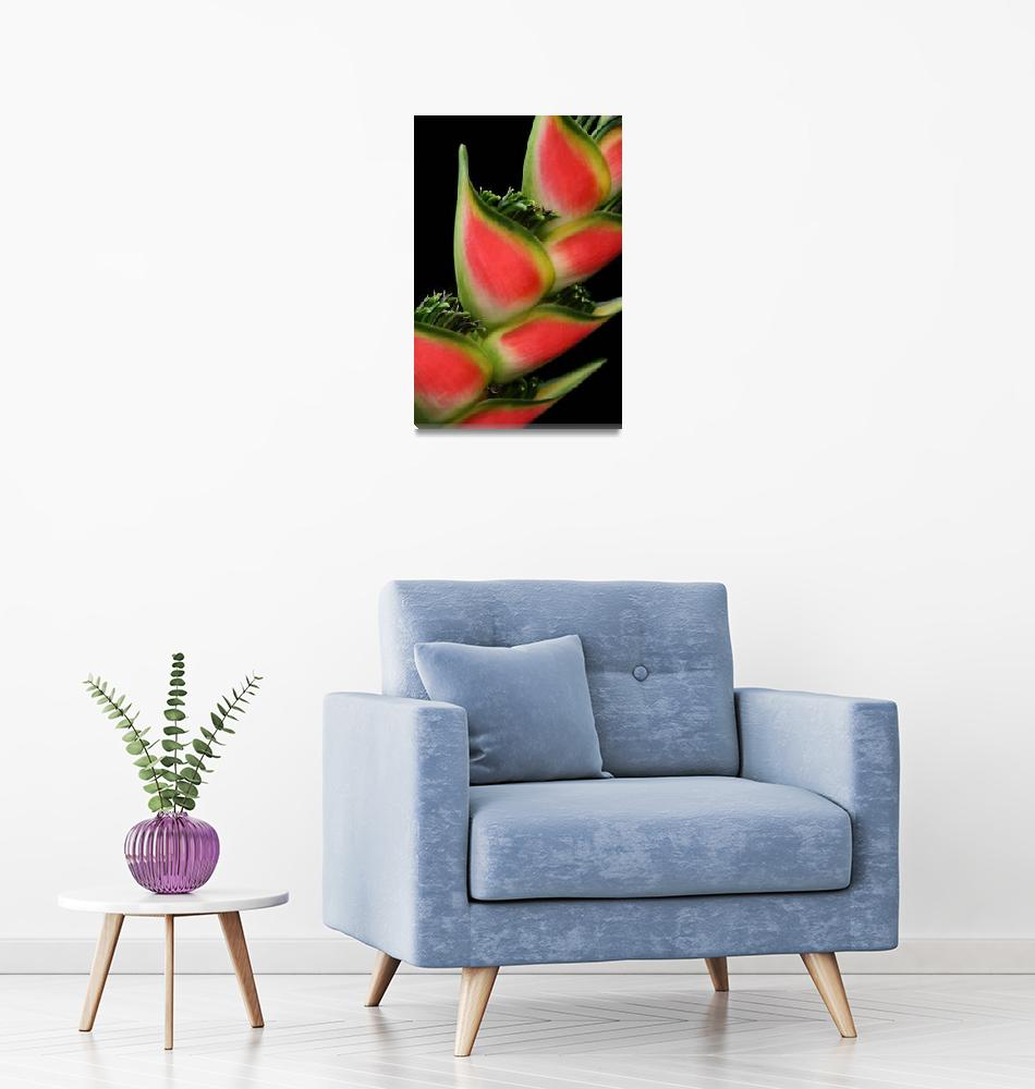 """""""Rainbow Heliconia Pink Spotted Lobster Claw""""  (2009) by sharonmau"""