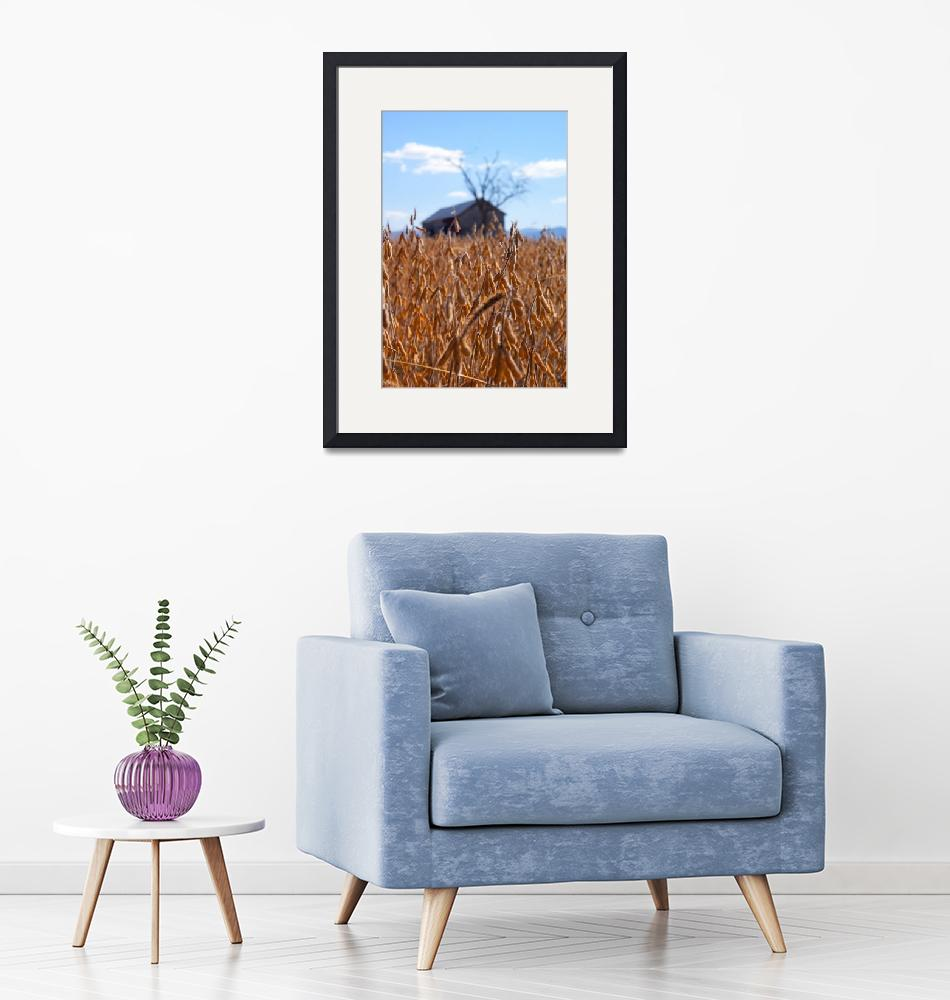 """""""Soybean field with abandoned barn""""  (2012) by thewaltonsare"""