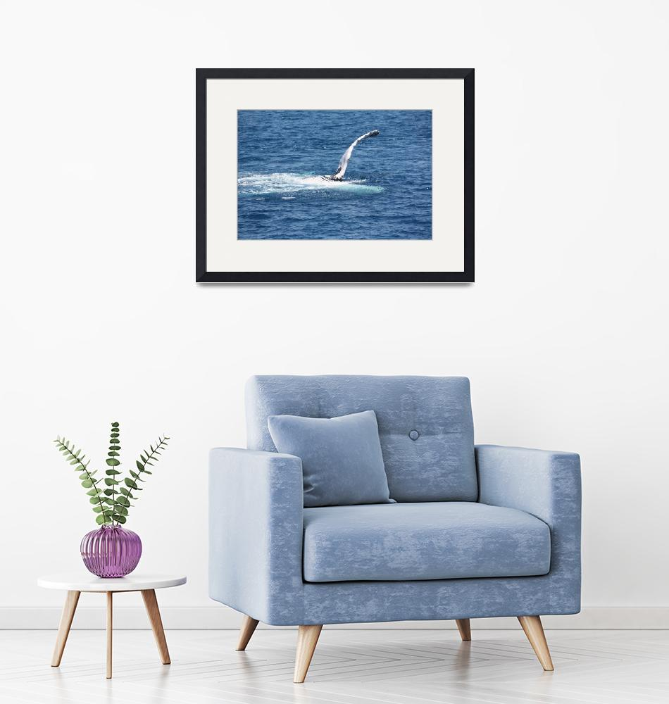 """""""NaP_ Whale Watching124""""  by nevilleprosser"""