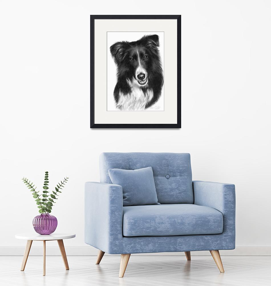 """""""Memorial Portrait of Malcolm, Border Collie""""  (2007) by sdonley"""