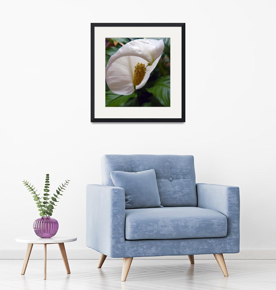 """""""Peace Lily""""  (2009) by deedemigjorn"""