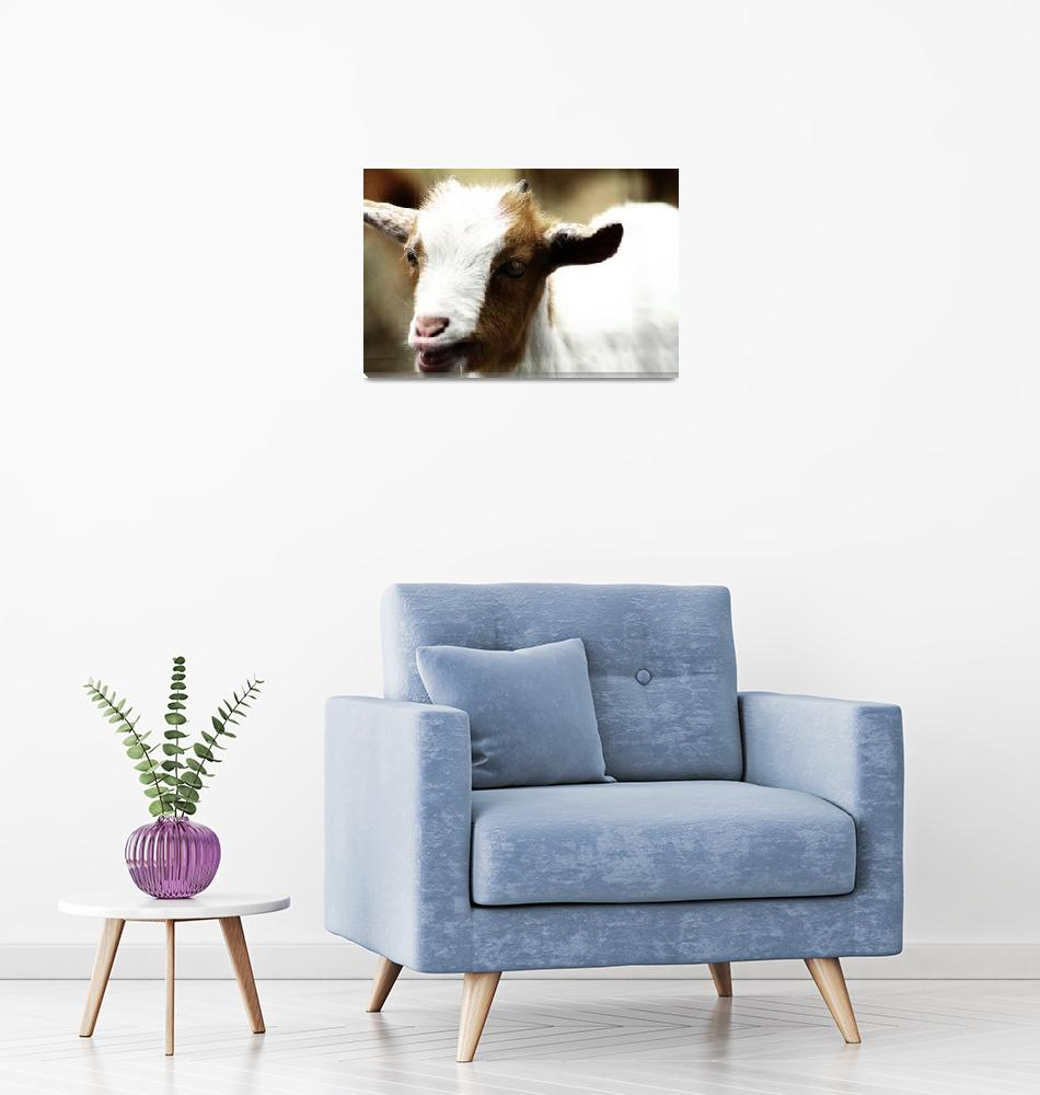 """""""Baby Goat 2""""  by ScottHovind"""