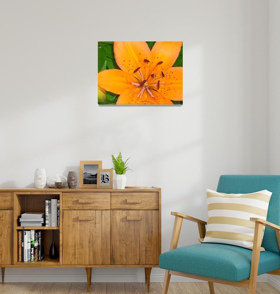 """""""The Lily and the Bee...""""  (2011) by HarmonicNature"""