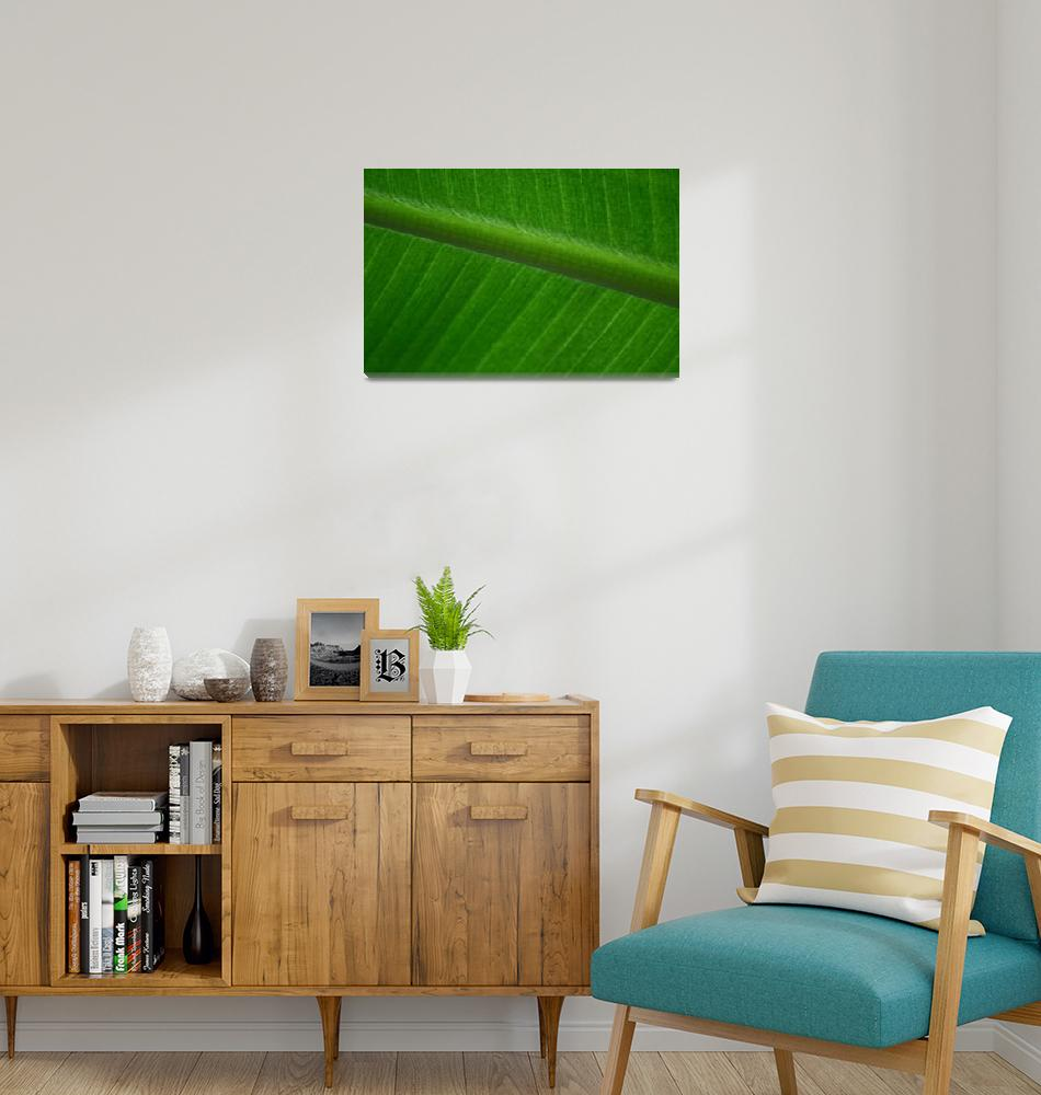 """Green""  (2005) by MarinaPhotography"