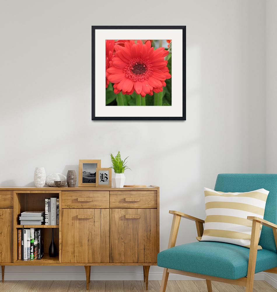 """Driving Miss Daisy (Red Salmon Gerbera)""  (2006) by CRS"