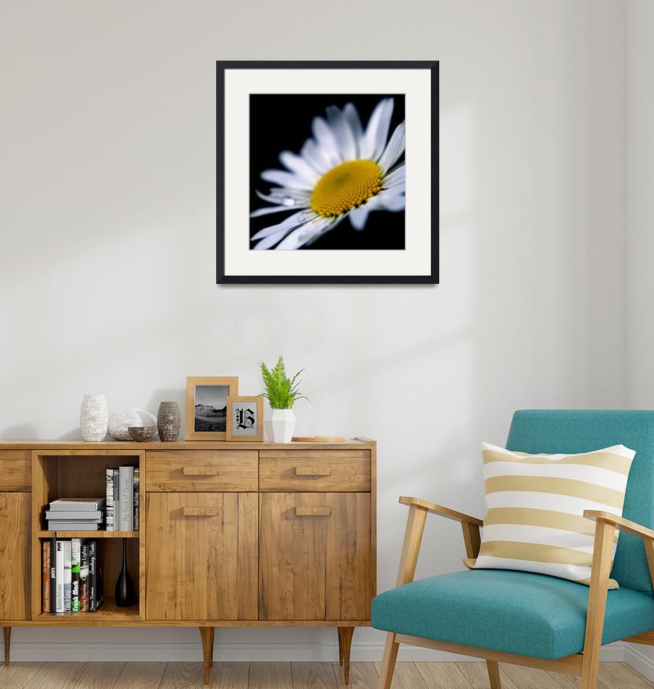 """""""Cape Daisy""""  by Mike_Bartley"""